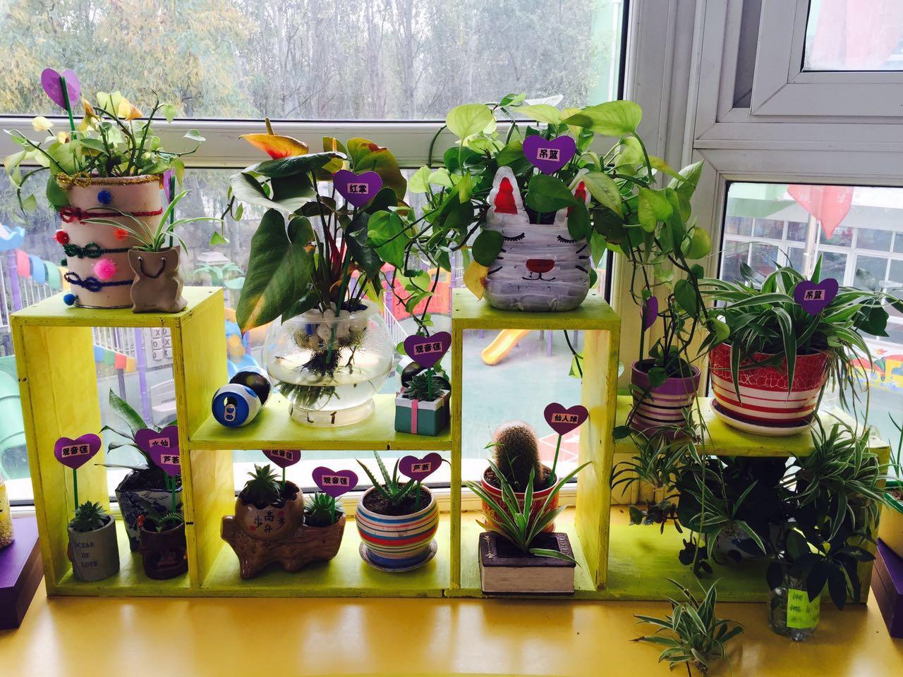 6植物1.jpg
